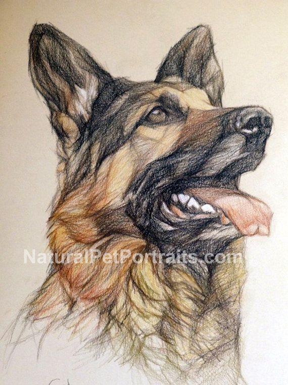 Custom Pet Portrait Color Or Black Pencil By R Gotowicz Https