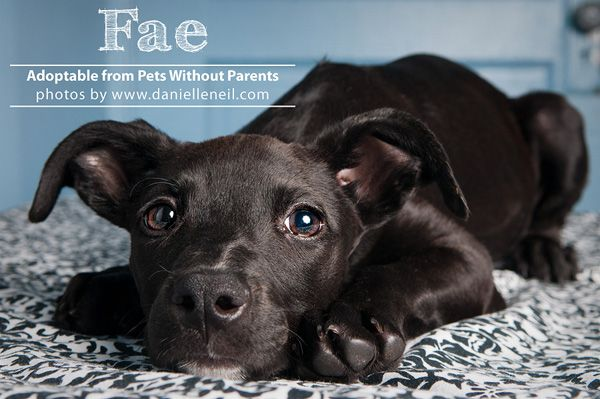 Oh The Puppies Adoptables From Pets Without Parents Pets Puppies Rescue Dogs