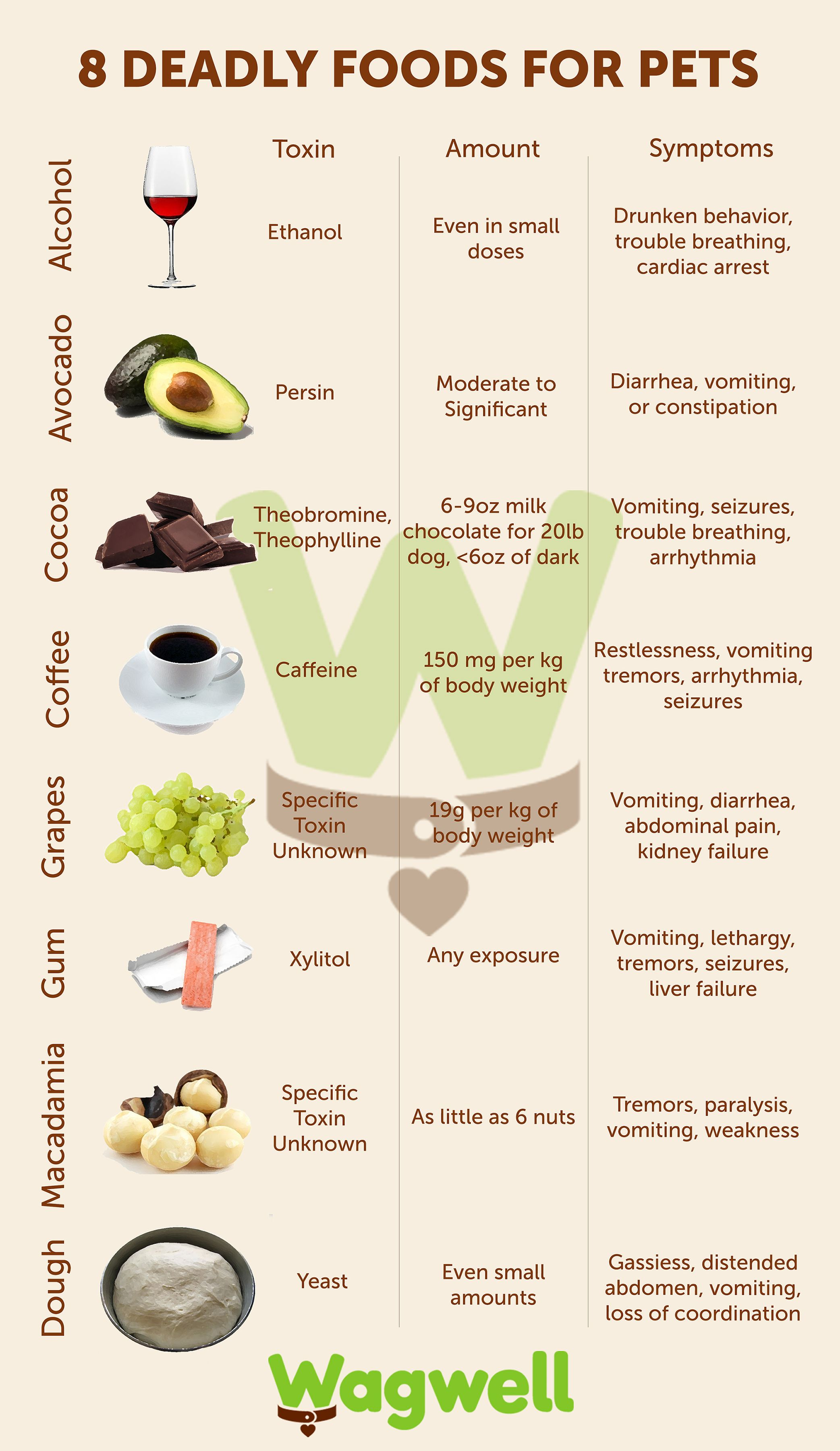 The 8 Most Poisonous Foods For Pets Wagwell Pets Very Good