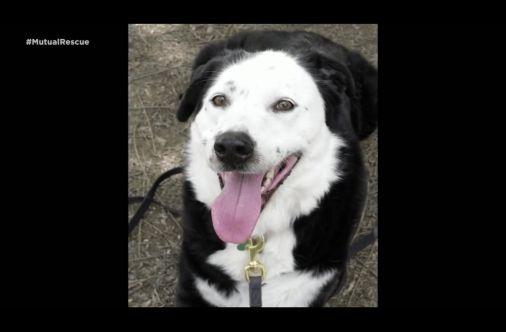How Adopting A Rescue Dog Saved This Man S Life Pet Adoption