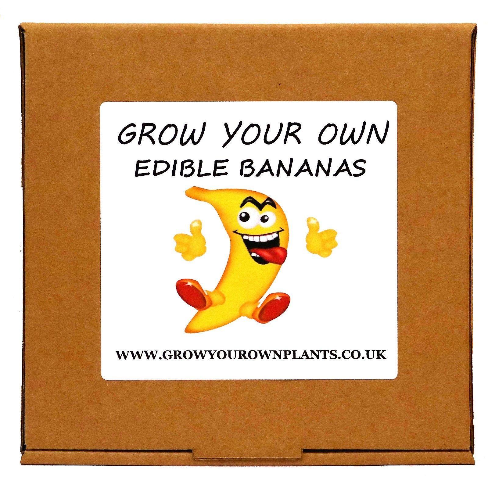 4.99 GBP - Grow Your Own Musa Banana Tree Plant Kit - Birthday Or ...