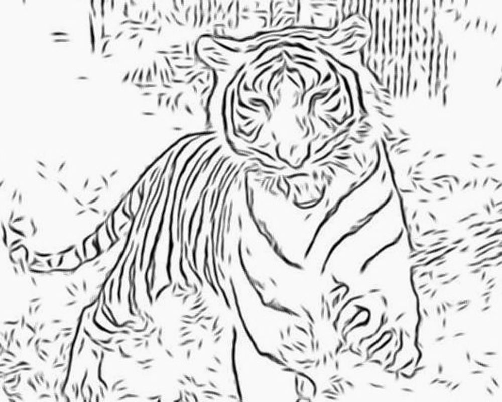 coloring pages tiger: Animal Coloring Tiger Coloring Pages,wild ...
