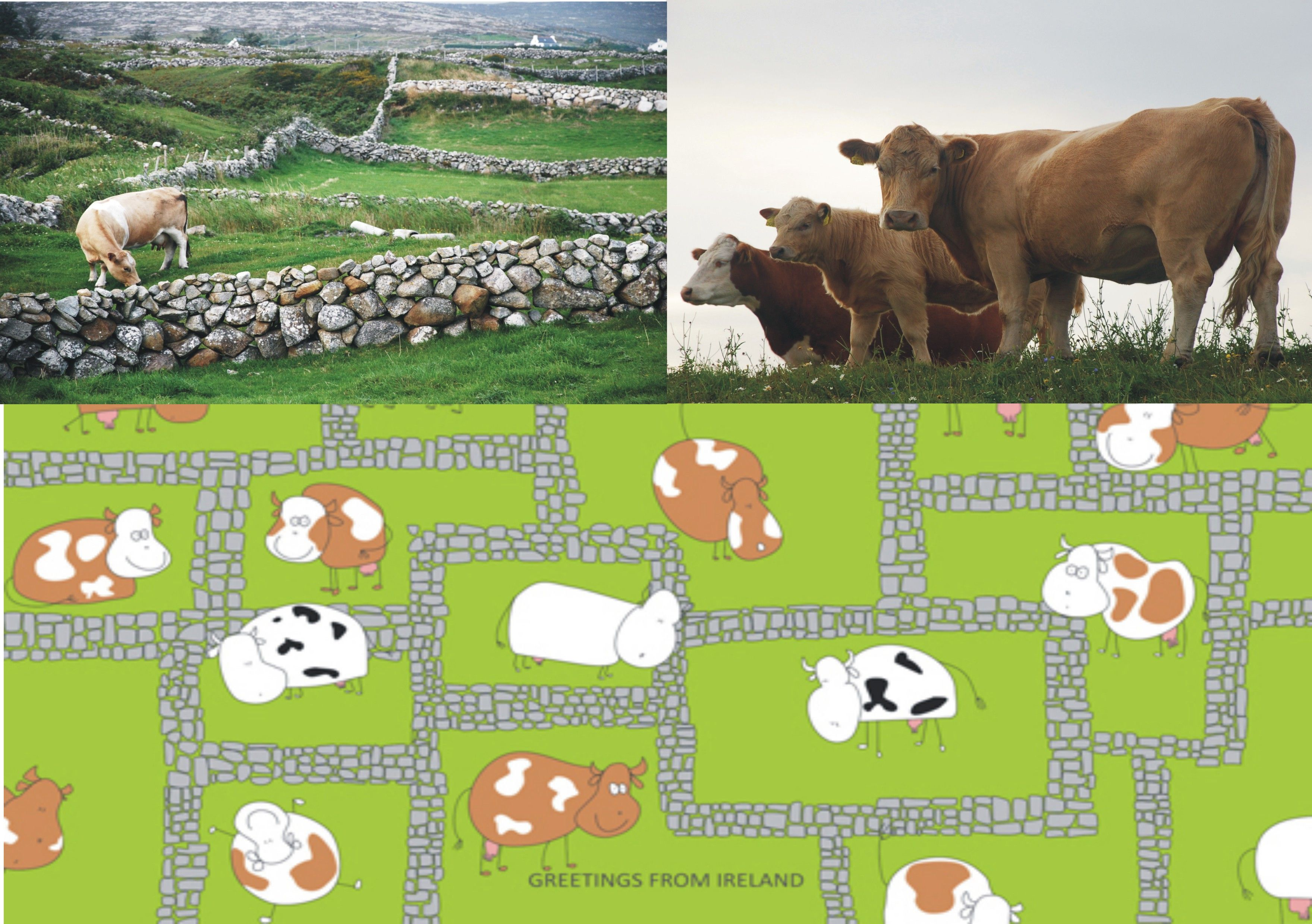 An example of how you could get inspired in Ireland. Cow there has only little square but is happy there:)