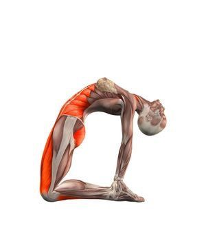 pinpamela bell english on yoga muscles used  yoga