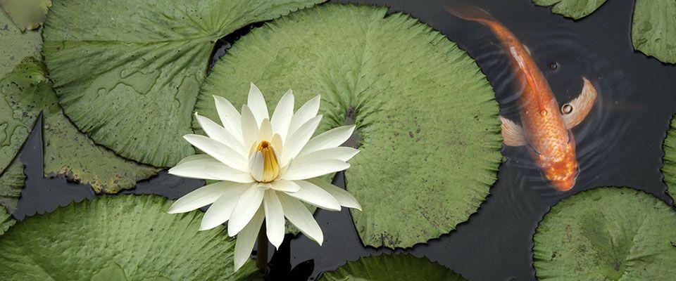 Over Wintering Your Plants | Moore Water Gardens