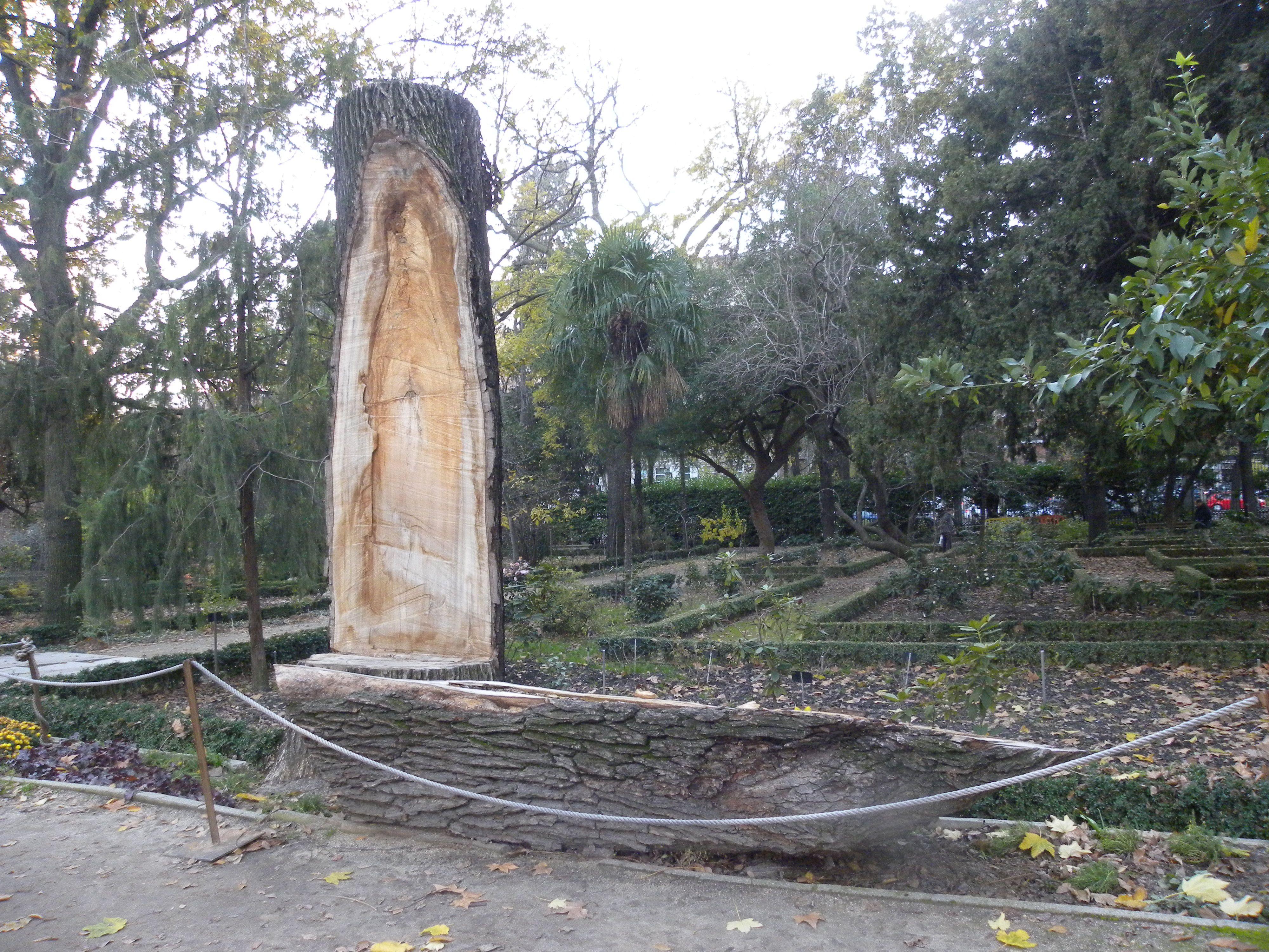 Real Jardín Botánico.