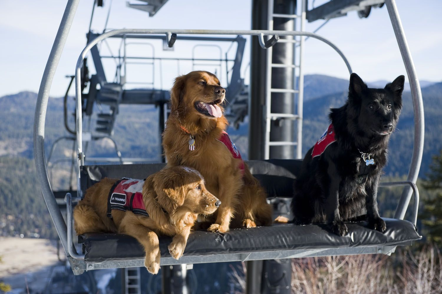 ca3e4be85ce14 Murphy, Boomer and Boone relaxing at the top of Red Dog chairlift at Squaw  Valley