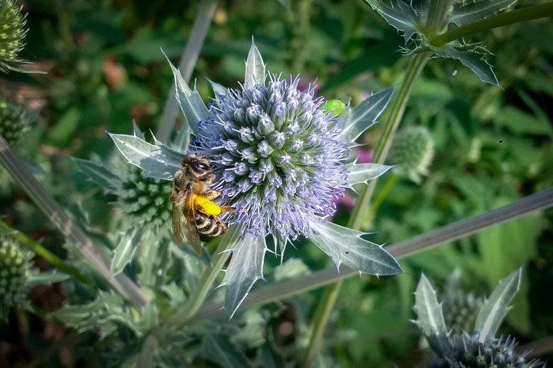 Pin Na Pszczoły I Rośliny Pożytkowe