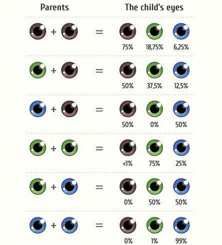 Eye Color Genetics Charts Eye Color Chart Eye Color Eye Facts
