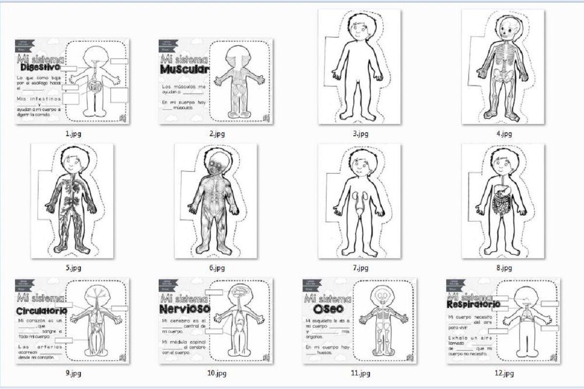 Sistemas del Cuerpo Humano para Recortar y Colorear | AULA VIRTUAL PRIMARIA  | Sistemas del cuerpo humano, Sistemas del cuerpo, Cuerpo humano para niños