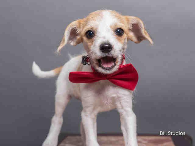 Gordo Houston Texas Petharbor Com Animal Shelter Adopt A