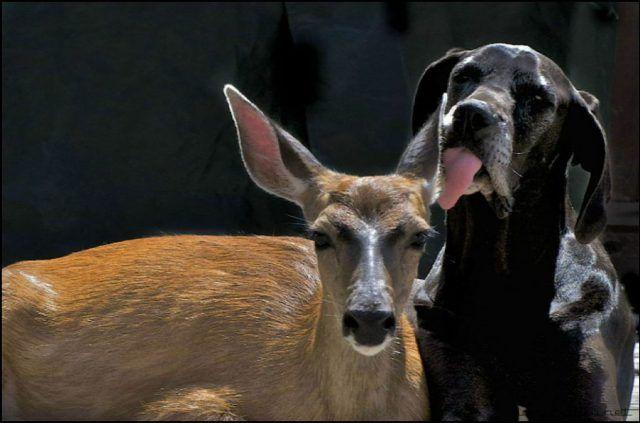 Наглядная дружба животных | Странные пары, Животные ...