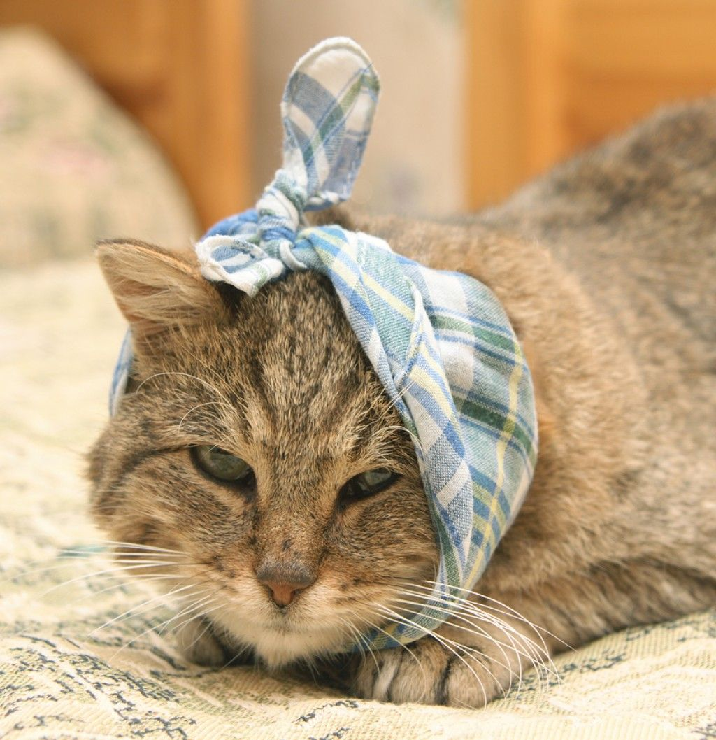 Common Cat Health Problems Including Kidney Disease Heart Disease And Even Asthma Sick Cat Pet Grief Sick Kitten