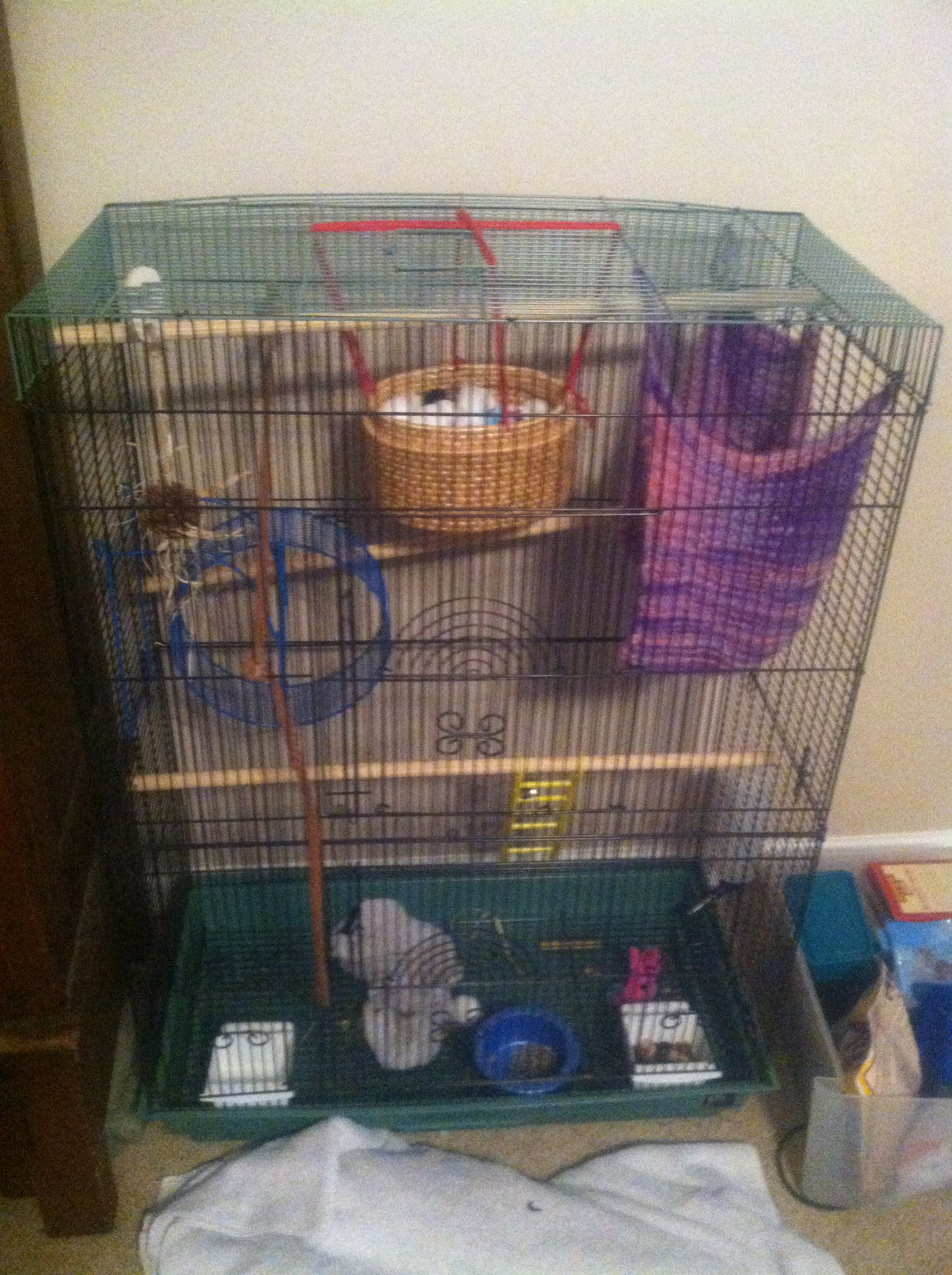 My Sugar Glider Cage Wooden Perches Diy Ball Pit Diy Pouch