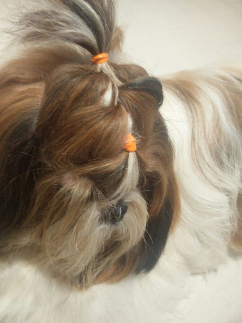 Puppies Lovely hair styles with braids video