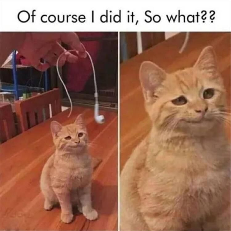 24 Funny Animal Pictures