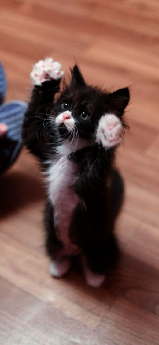 Cute Cats Good Night Images Cute Cats Memes Kittens Cutest Cute Animals Cats And Kittens