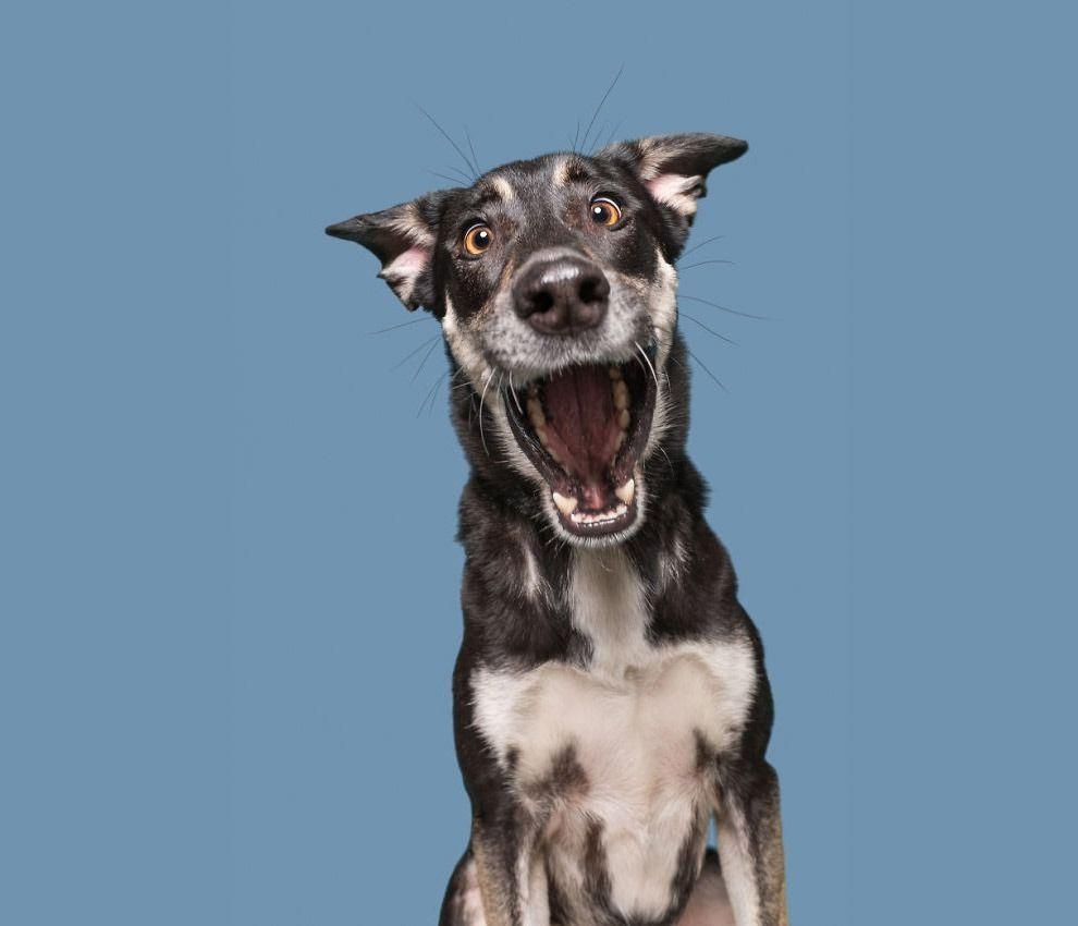 Новости | Фотографии собак, Собаки, Потрясающие фотографии