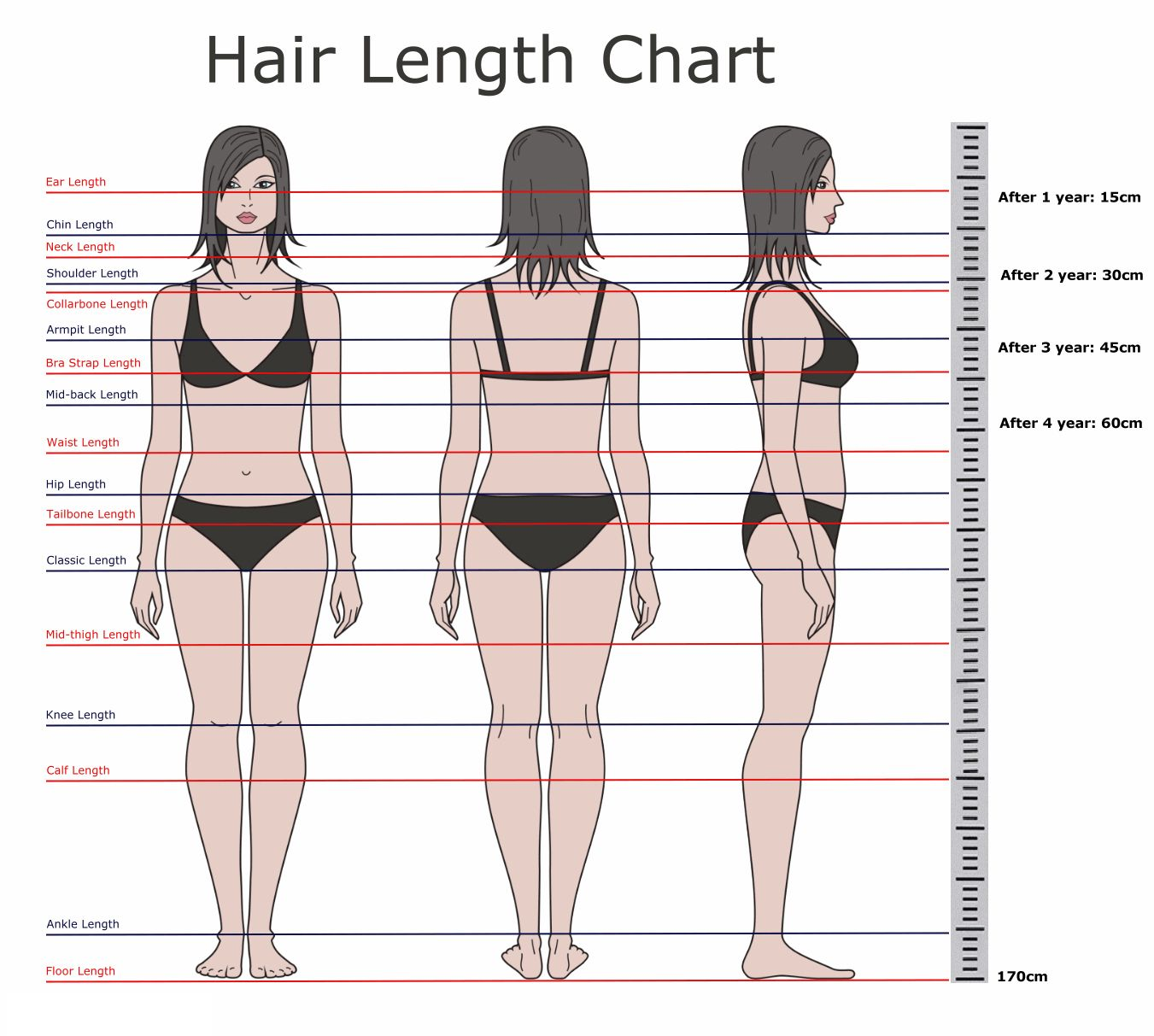 Hair length chart also best images on pinterest hairstyle ideas rh