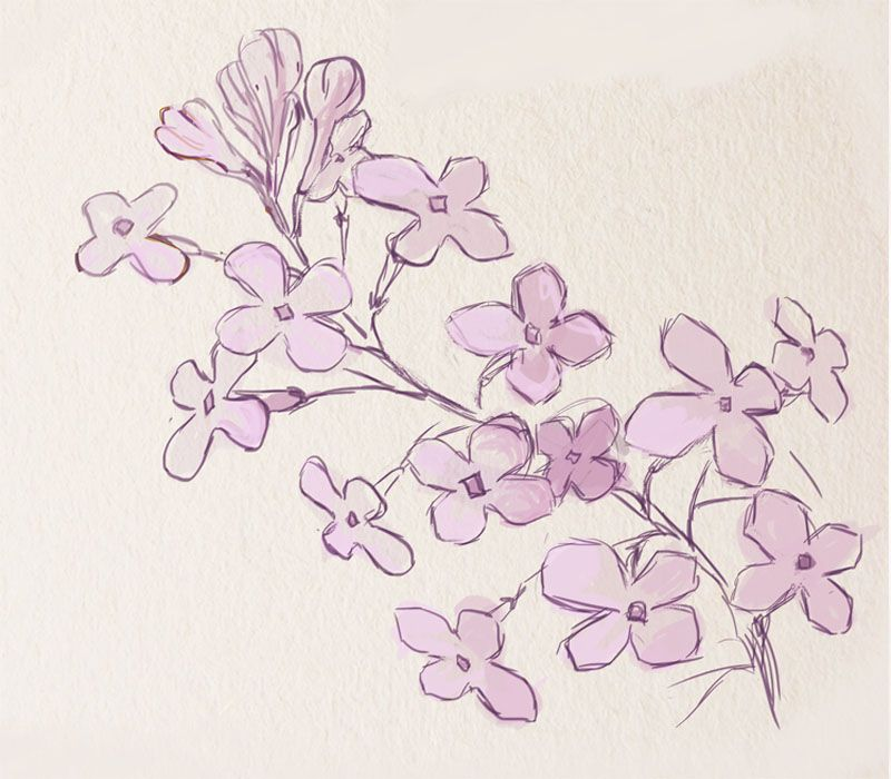 How To Paint A Lilac Flower Drawing Tutorials Flower Drawing Pencil Drawings Of Flowers