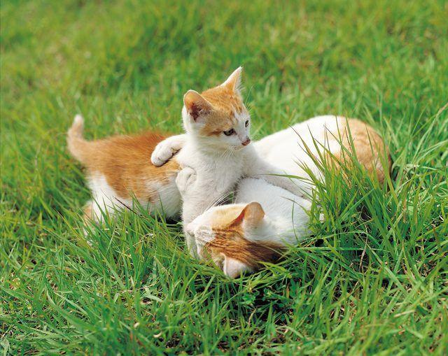 Types Of Decongestants For Felines Fleas On Kittens Cute Animals Feral Kittens