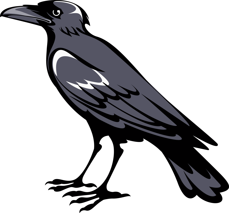 Ravencrow heraldic creatures pinterest explore raven art crows ravens and more buycottarizona