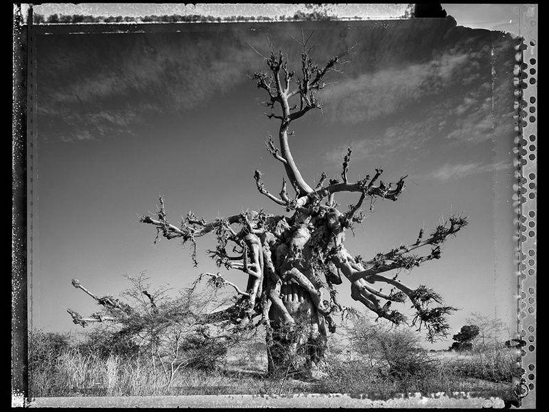 baobab, tree of generations #4 | foto: elaine ling