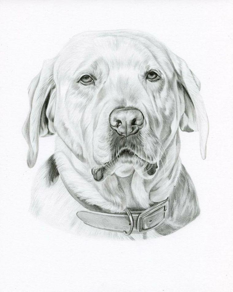 Ritratto Cane Animale Disegni Da Copiare Facili E Belli Matita Foglio Disegno Realistico Arte Di Cani Disegno Di Visi
