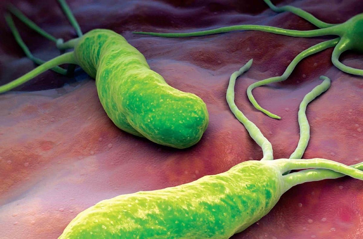 Helicobacter dieta pylori per
