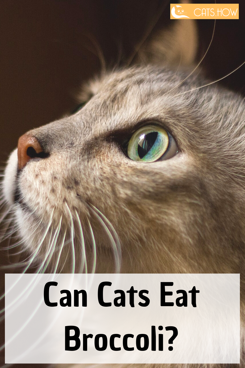 Can Cats Eat Broccoli In 2020 Cat Nutrition Cat Care Tips Cat Health