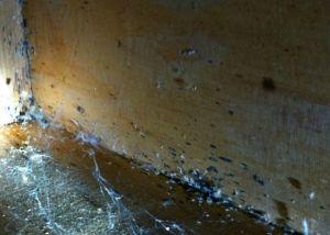 Bed Bug Spotting And Eggs Under Dresser C Thrasher Termite Pest Control Inc Pest Control Termite Pest Control Termites