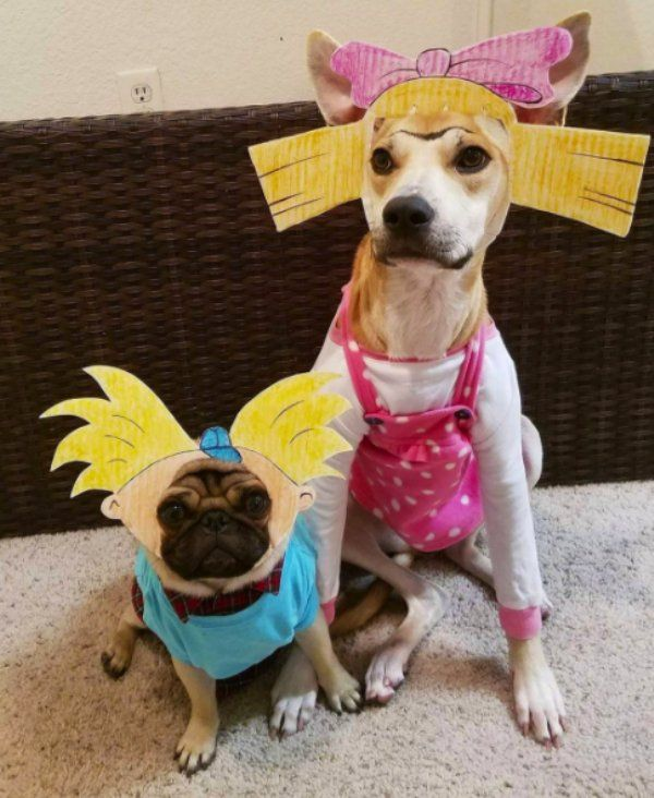 10 Costumes For Your Dog To Make Your Co Workers Jealous Pet