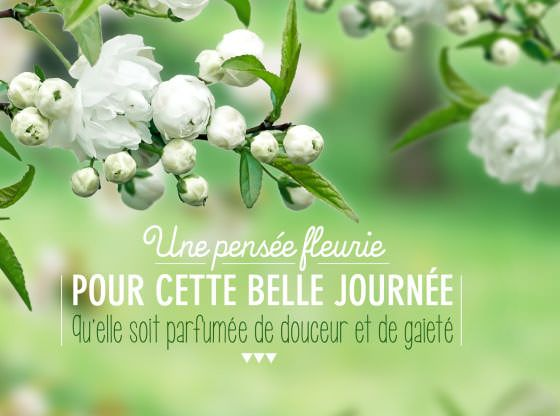 dromadaire carte bonne fête Carte bonne fête, douceur florale | Carte anniversaire gratuite