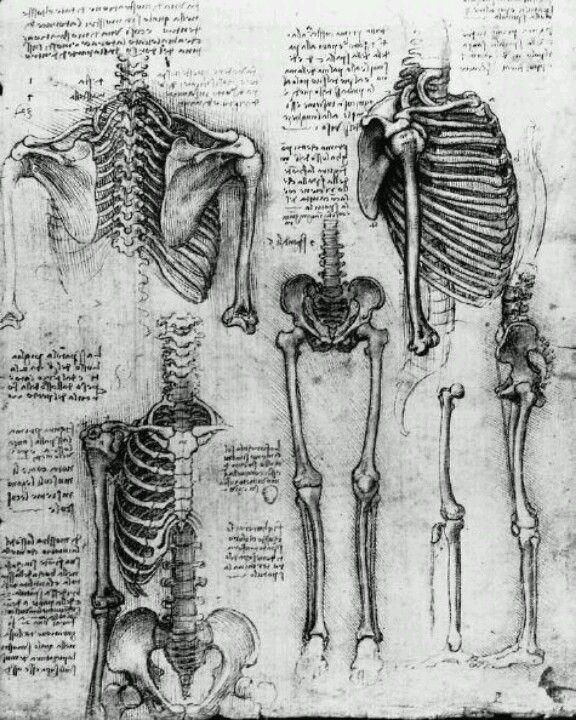 Anatomy Da Vinci Love Da Vinci Anatomical Drawings Anatomy