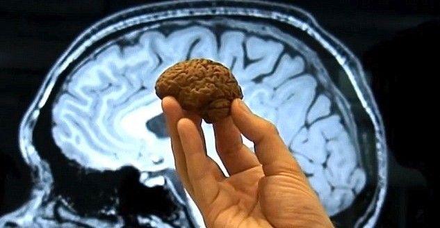 El descubrimiento, por tanto, abre el camino al desarrollo de nuevos analgésicos, ya que los medicamentos actuales para tratar el dolor se dirigen al sistema nervioso central.