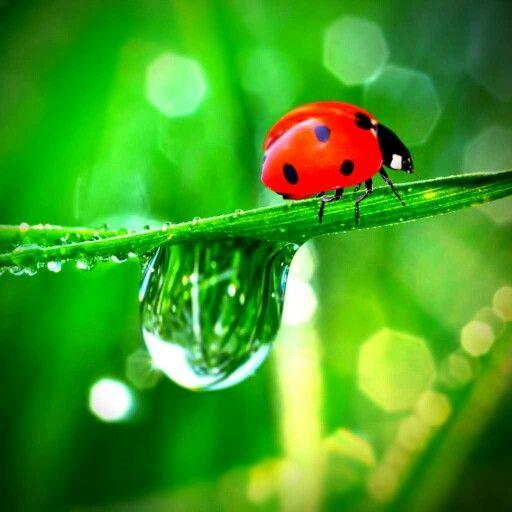 Good Luck Charm My Very Own Edits Pinterest Wallpaper Ladybug