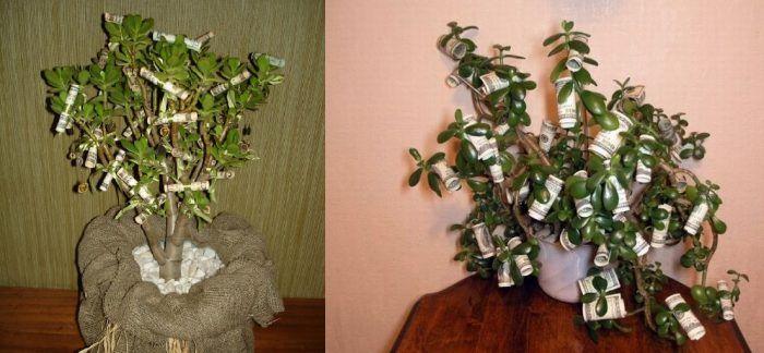 денежное дерево игра с деньгами