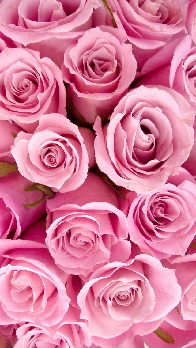 Customize Your IPhone 5 With This High Definition Pink Roses Wallpaper From HD Phone Wallpapers