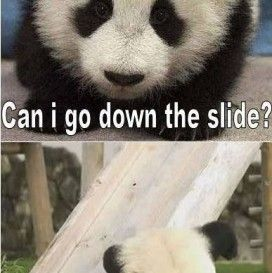 Quotes About Funny Panda My Quotes Life Cute Animals Cute Baby Animals Cute Panda