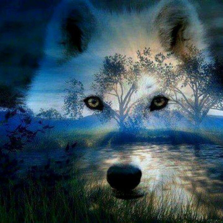 Pin Van Anouk Vissers Op Achtergrond Pinterest Wolf Wolf Spirit
