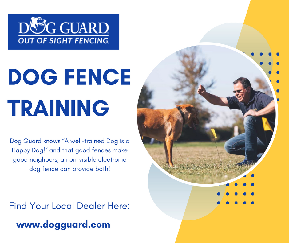Trained your dog with our dog fence certified and