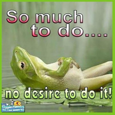 so much to do funny quotes quote lol funny quote funny quotes humor