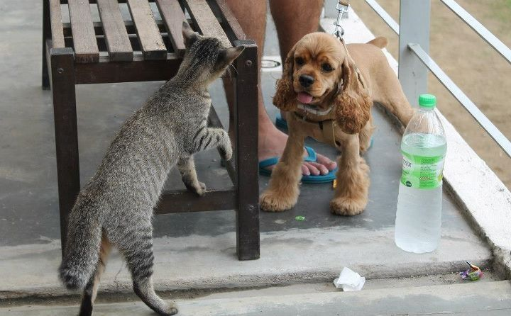 Bella makes a friend!!!!