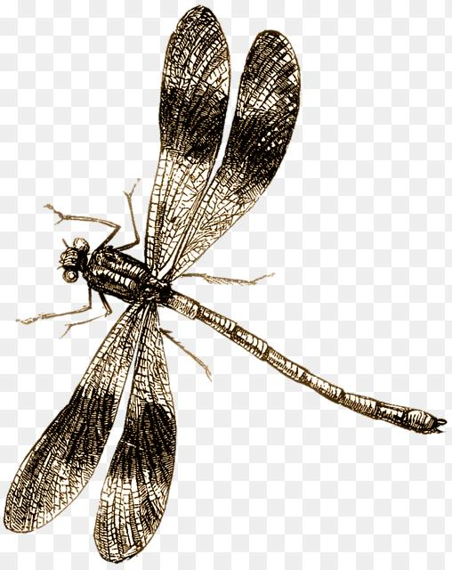 Dragonfly Drawing Png Dragonfly Drawing Insect Free Image On Pixabay 508 640 Png Download Free Transparent Background Dragonfly Drawing Dragonfly Insects