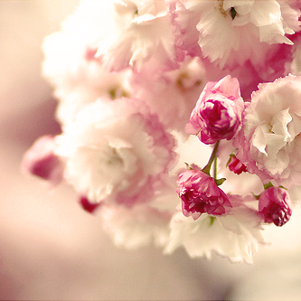 صور ناعمة 2017 خلفيات كيوت روعة Cute Food Wallpaper Food Wallpaper Flowers