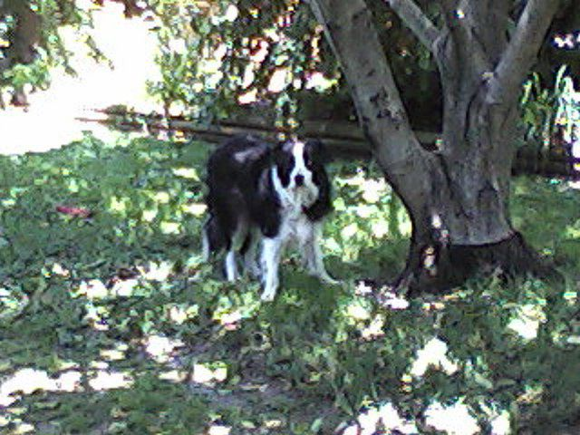 Jay Jay The Border Collie Pets Border Collie Collie