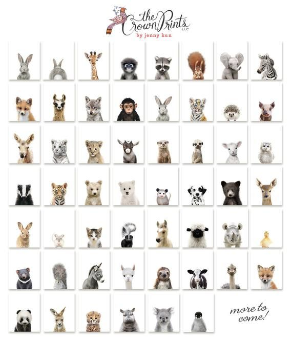 Set of 2 bunny prints, PRINTABLE wall art, The Crown Prints, Nursery art, Woodland animals, Nursery art, Baby animal prints, Nursery animals #elephantitems