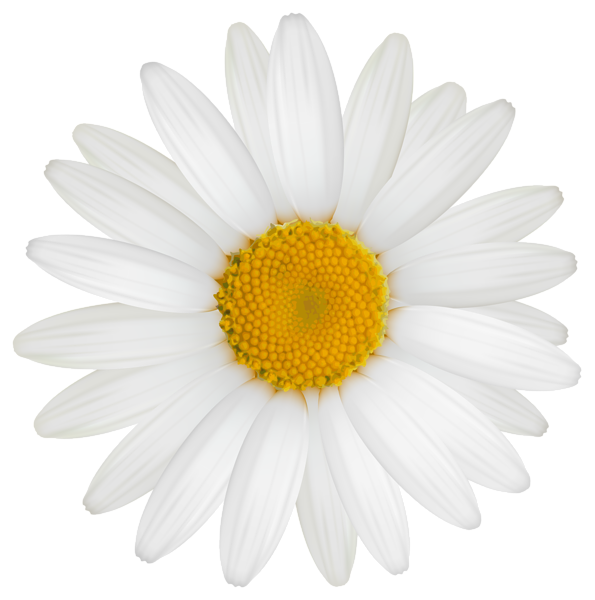 Daisy Png Clipart Image Daisy Image Daisy Clip Art