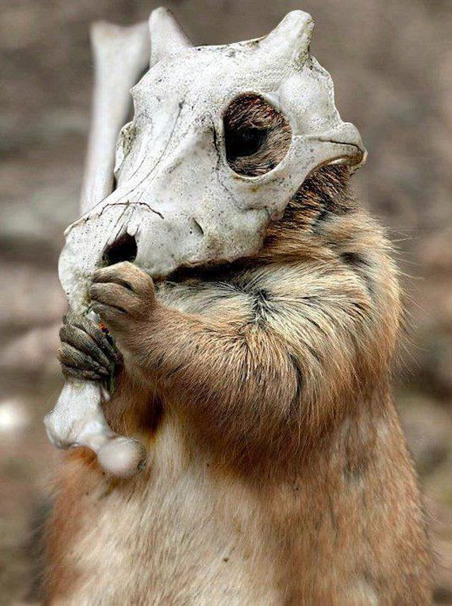 awesomeanimals09 27 seriously cool animals hahaha pinterest