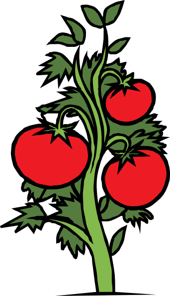 tomato plant clip art free vector clipart best clipart best rh pinterest com vegetable garden clipart images vegetable garden clipart black and white